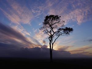 Lone Tree (2)